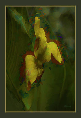 Canna Lily Impression Poster