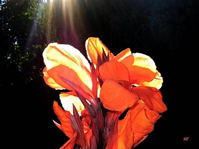 Canna Lily Poster by Will Borden