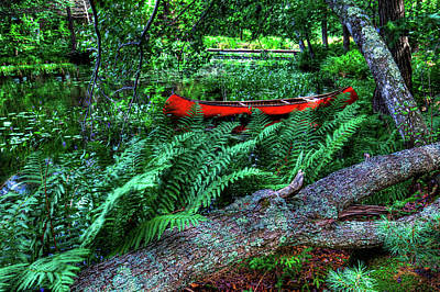 Canoe Among The Ferns Poster by David Patterson