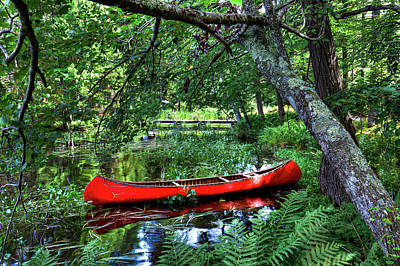Canoe Under The Canopy Poster by David Patterson
