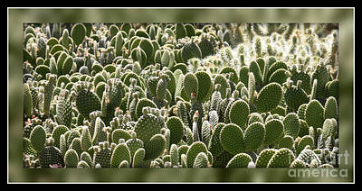 Canvas Of Cacti Poster by Carol Groenen
