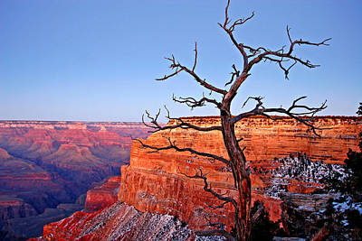 Canyon Tree Poster by Peter Tellone