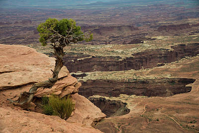 Poster featuring the photograph Canyonlands by Gary Lengyel
