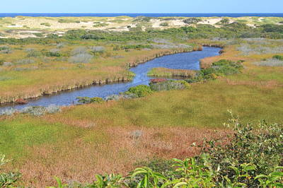 Cape Cod National Seashore Small Swamp Trail Early Autumn Poster by John Burk
