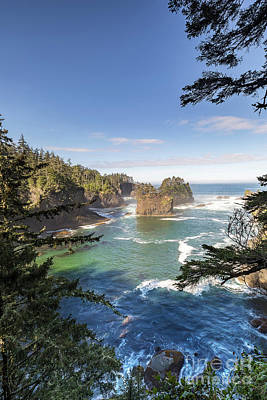 Cape Flattery In Washington Framed By Pine Trees Poster