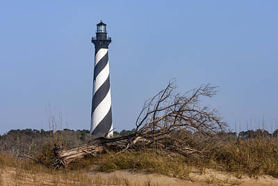 Cape Hatteras Lighthouse With Driftwood Poster