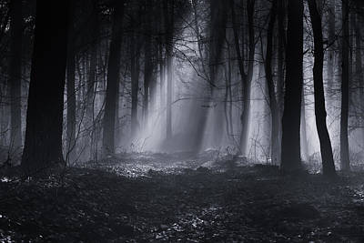 Capela Forest Poster by Julien Oncete