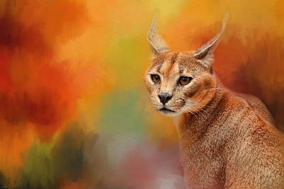 Caracal In Autumn Poster