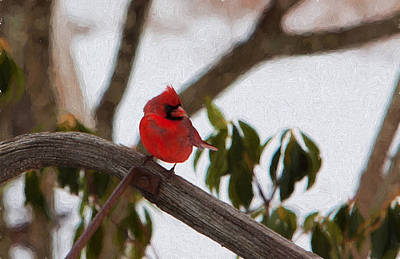 Cardinal In Winter Poster by Jeff Folger