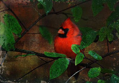 Cardinal Poster by Perry Van Munster