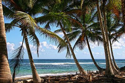 Caribbean Palms Poster