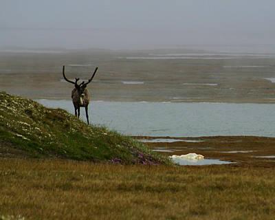 Caribou Fog Poster