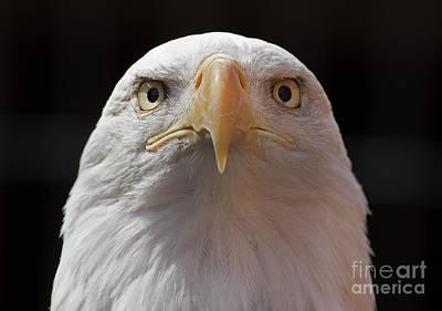 Carlisle Eagle Poster