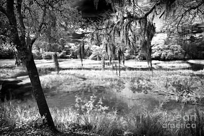 Carolina Swamp Poster by John Rizzuto