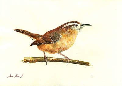 Carolina Wren Watercolor Painting Poster by Juan  Bosco