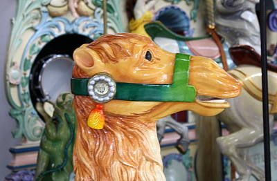 Carousel Camel Poster