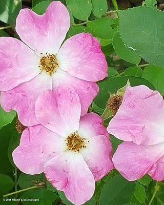 Carpet Roses Poster