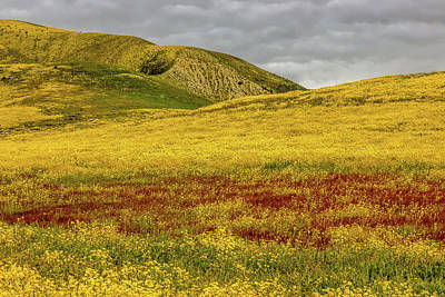 Poster featuring the photograph Carrizo  Plain Super Bloom 2017 by Peter Tellone