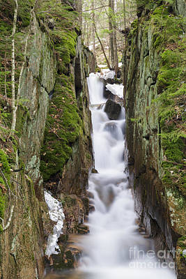 Cascade Brook - Flume Gorge Scenic Area New Hampshire Poster by Erin Paul Donovan