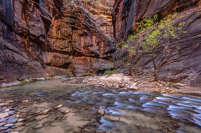 Poster featuring the photograph Cascades In The Narrows Of Zion by Pierre Leclerc Photography