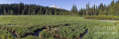 Cascades Meadow Panorama Poster