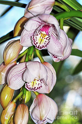 Cascading White Orchids By Kaye Menner Poster