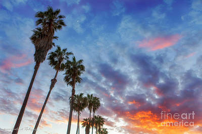 Casitas Palms Poster by John A Rodriguez