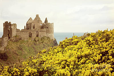 Castle Ruins And Yellow Wildflowers Along The Irish Coast Poster