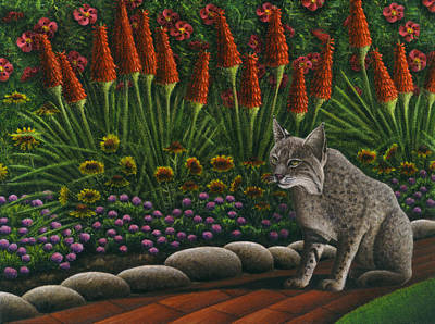 Cat - Bob The Bobcat Poster by Carol Wilson