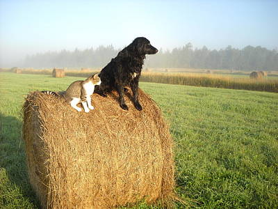Cat And Dog On Hay Bale Poster