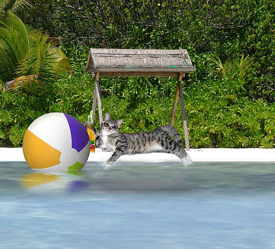 Cat At The Beach Poster