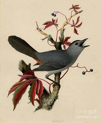 Cat Bird Poster by Celestial Images