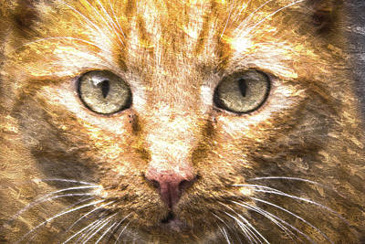 Cat Closeup Oil Painting Poster by Design Turnpike