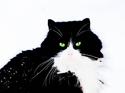 Poster featuring the digital art Cat Eyes by Yury Bashkin