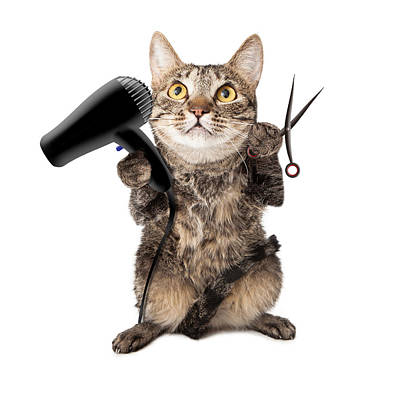 Cat Groomer With Dryer And Scissors Poster by Susan Schmitz