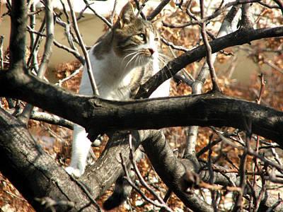 Cat Hunting Bird Poster by Judi Saunders