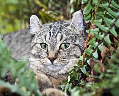 Cat In A Fern Poster by Susan Leggett