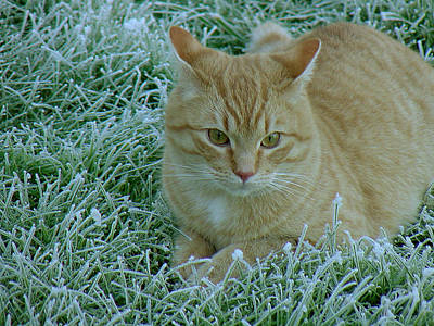 Cat In Frosty Grass Poster