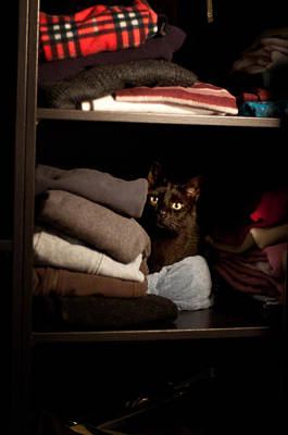 Poster featuring the photograph Cat In The Closet by Laura Melis