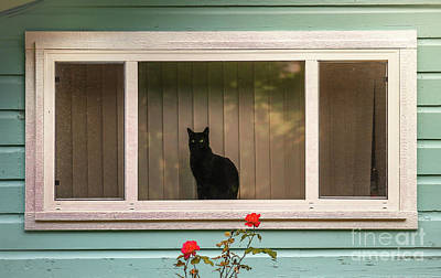 Cat In The Window Poster by Robert Frederick