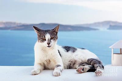 Cat Lying On Stone Wall In Oia Town, Santorini, Greece. Aegean Sea  Poster