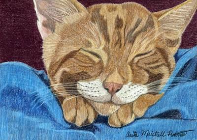 Cat Nap Poster by Anita Putman
