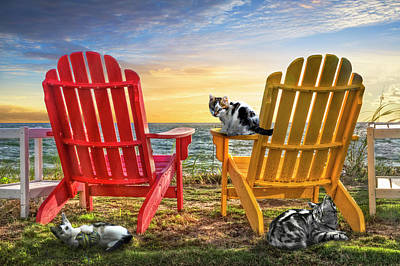 Poster featuring the photograph Cat Nap At The Beach by Debra and Dave Vanderlaan
