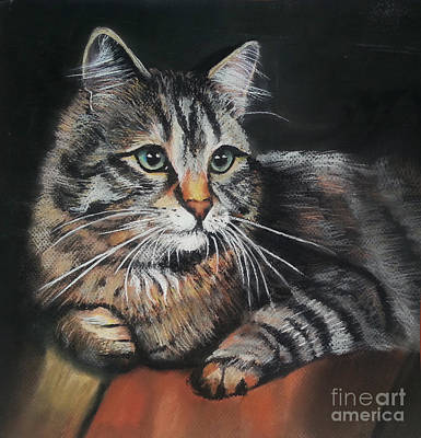 Cat Pastel Drawing Poster