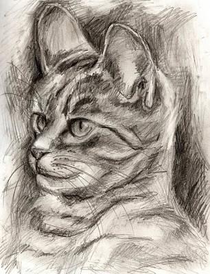 Cat Study Drawing No Three Poster