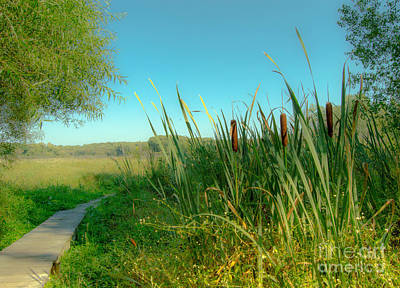 Cat Tails On The Path Poster