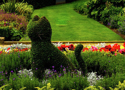 Cat Topiary Belfast Poster