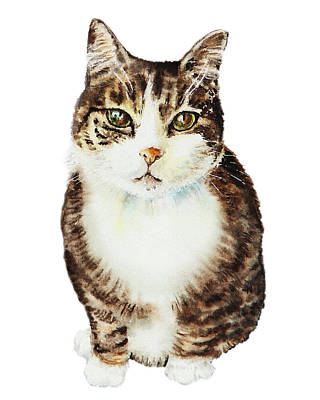 Cat Watercolor Illustration Poster