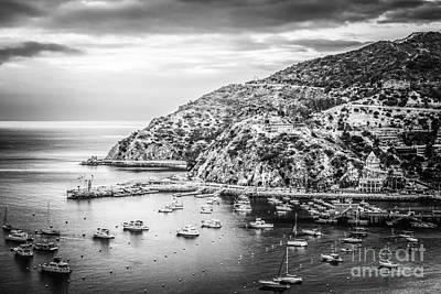 Catalina Island Black And White Photo Poster