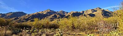 Catalina Mountains Panorama Poster by Rincon Road Photography By Ben Petersen
